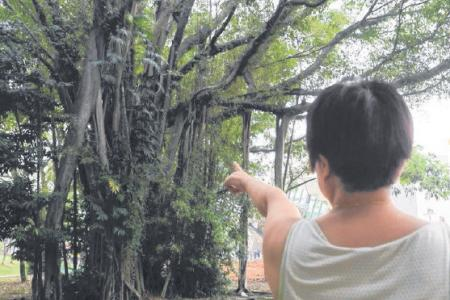 Winds blow worms to Bukit Timah Hawker Centre