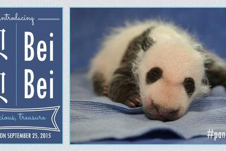 First ladies Michelle Obama and China's Peng Liyuan name a panda