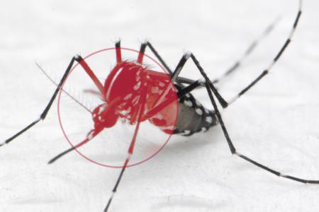 NEA advises travellers to mozzie-proof homes as dengue cases soar