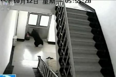 Black bear shot dead after it wanders into school
