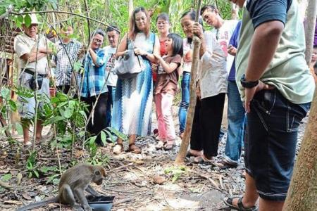 'Lucky' monkey draws punters to Sarawak