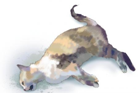 7 cats found dead in 12 days in Yishun