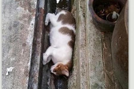 Cat-killing in Yishun continues