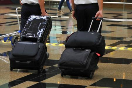 Dog flies undetected from HK to Japan in owner's luggage