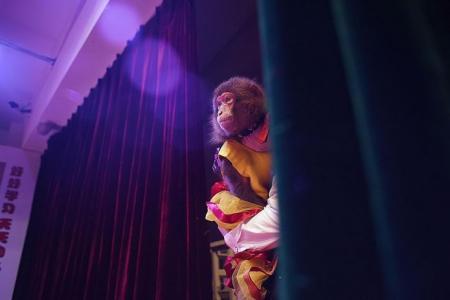 China's booming monkey business