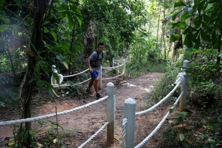 NParks scraps adjacent hiking trail along Bukit Timah bike trail