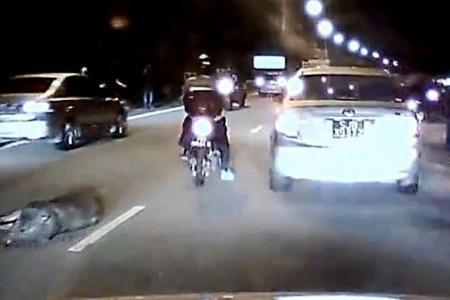 Motorcyclist runs over wild boar in SLE crash