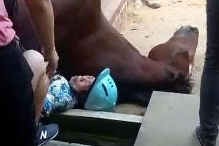 Horse in elderly woman's fatal ride had not eaten for hours