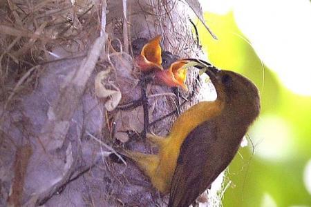 Retiree becomes sunbird guardian