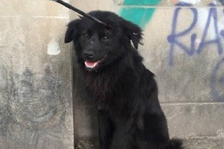 Stray dog with arrow in head rescued