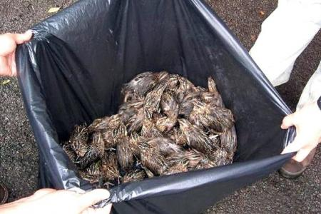 Vesak Day practice of releasing animals harms ecosystems