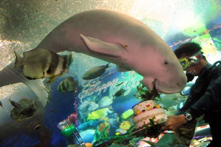 Remember Gracie the Dugong? She died