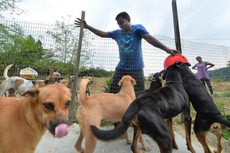 Singapore couple spend $8,000 a month to house strays in JB
