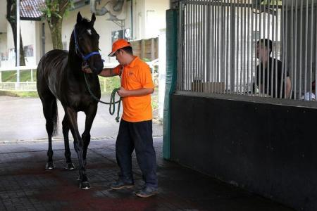 No horsing around before a race