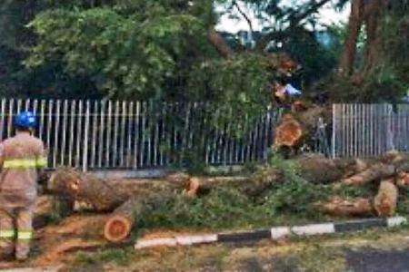 Tree falls at Still Road, injuring man