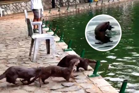 Otters eat up to $500 worth of fish a night at fishing pond