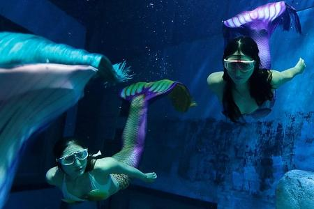Diving into their mermaid fantasy