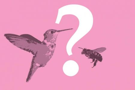 Birds and the bees sex talk