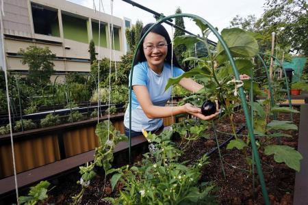 Urban farming plotting its way to popularity