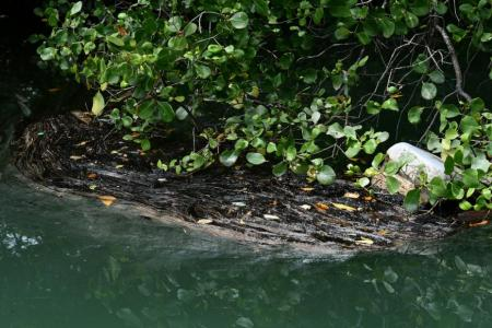 Oil floating on water near mangroves at Pulau Ubin on 5 January 2017. Cleanup operations were carried out on a 100m stretch of Noordin beach.