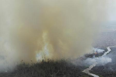 Forest and land fires reappear in Riau