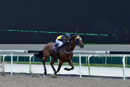 Lincoln Road looks set for another victory this Friday judging by his trackwork at Kranji yesterday morning.