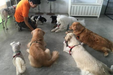 Doggy Daycare - Up For Paws.