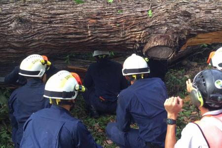 One dead, four injured, after large tree falls at Botanic Gardens
