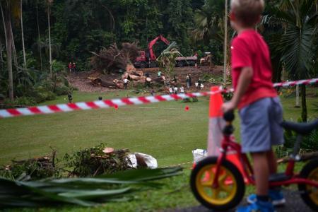 NParks: Botanic Gardens safe to visit