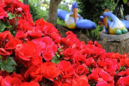 Flower power for health