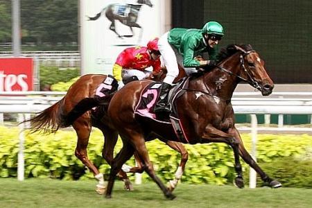 Gilt Complex a quality horse, says Rodd
