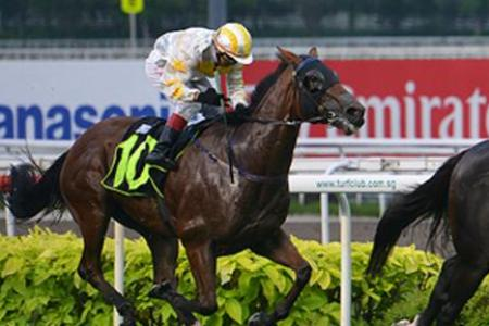 Gallops by horses engaged on Sunday