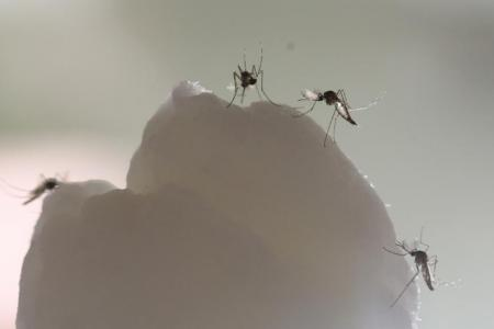Wearable mosquito repellents may not work