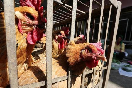 Worst ever bird flu in China