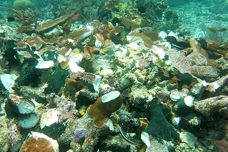 Cruise ship crashes into coral reefs in Indonesia