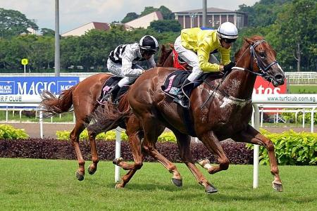 Gallops by horses entered for Friday