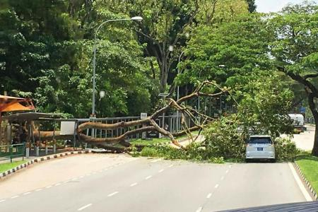 Tree falls across road near Singapore Discovery Centre