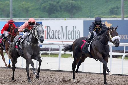 Gallops by horses engaged for Sunday