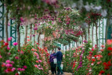Belgian king's colonial-era greenhouse opens to public