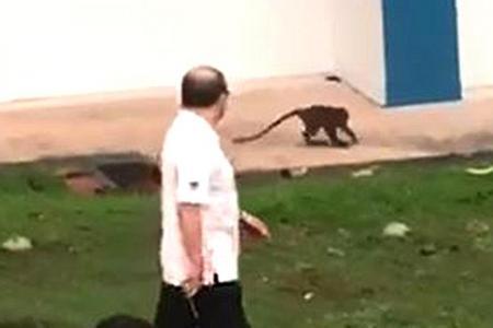 Segar Road monkey still at large