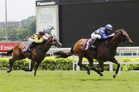 Gallops by horses engaged for Monday