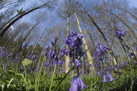 Belgium's flower power threatened by trampling