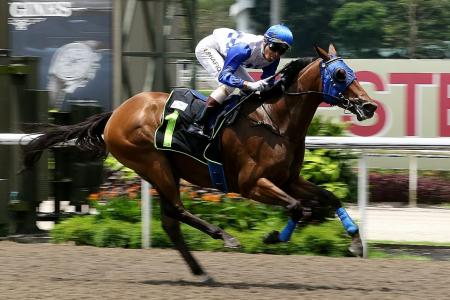 Khoo sees more success with 'Elite' horses