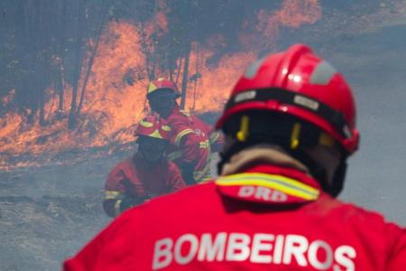 at least 62 dead in Portuguese forest fires