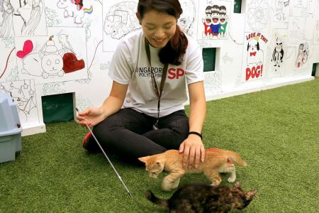 SP welcomes students back to school with cat therapy event