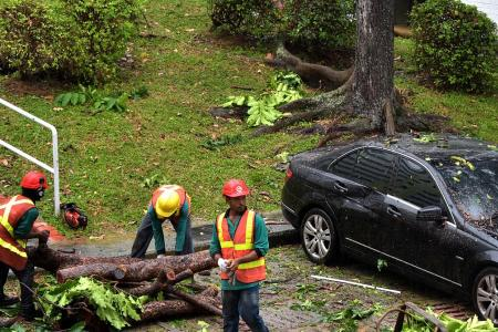 Driver unhurt after tree lands on car