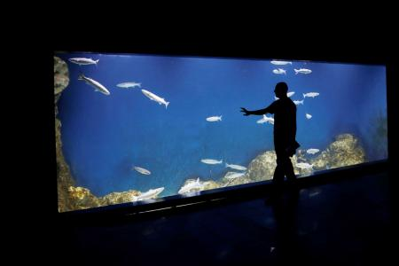 Holy water: Jerusalem aquarium set to open at Biblical Zoo