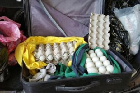 Man fined for illegally importing balut eggs