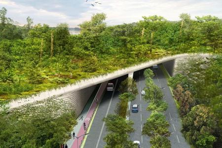 New Mandai wildlife crossing to be up by 2019