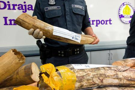Mammoth seizure of wildlife at airport